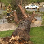 DIGITAL -- 9/3/04 -- Weather:  Mesa Firefighters Derek Williams (cq) left and Joe McKenzie (cq) clear a tree from Stapley Rd and E. Glencove St. in Mesa, Friday Sept., 3, 2004.  (David Kadlubowski The Arizona Republlic)