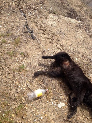 Photos show a rope tied around the dog's right rear leg