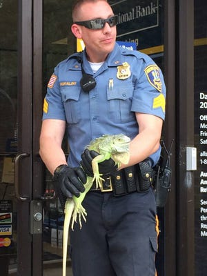 Sgt. Ed Kukalski captured a 2 foot iguana.