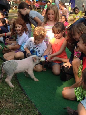 Ava Wdovichik feeds a piglet at the 2014 Middlesex County Fair.
