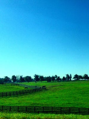 The sight of a horse farm makes every homegrown Kentuckian happy!
