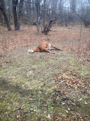 A picture posted on Facebook Saturday by the Vermont Game Warden Association shows a dead pony in Highgate.