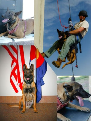 Loveland police are asking the community to band together and help a K-9 get a bulletproof vest.