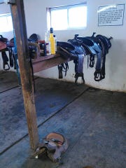 A hands on saddle fitting event takes place on Saturday