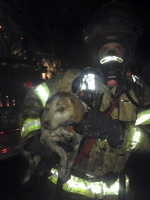 Firefighters rescue a family dog from a blaze on Lotus Drive early Sunday morning.