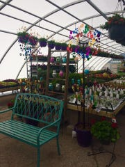 Des Moines Farmers Market regular Stam Greenhouse has opened a temporary nursery in Urbandale.