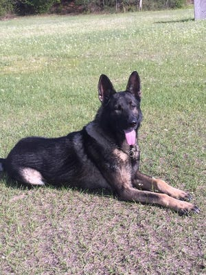 HPD officials are searching for Roni, a police service dog who was last seen at about 6 a.m. Monday.