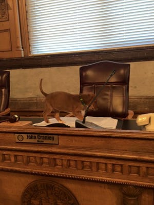 Earlier this year Uber brought puppies to City Hall.