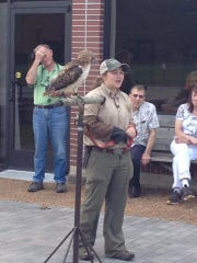 Kids will have the opportunity to touch an owl with rangers from Reelfoot State Park at the fourth annual Hatchie BirdFest.