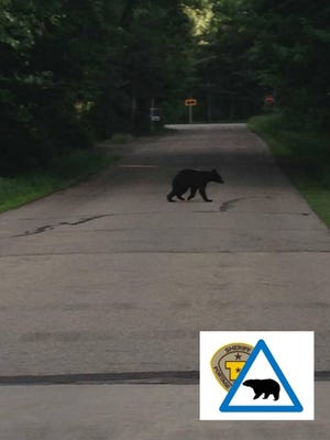 A bear was spotted Tuesday wandering in the town of Plover.