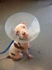 Good Juju Rescue Fund assists with vet bills, food