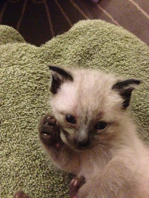Maxwell Jamal at three weeks old. He was found under a porch in Grand Rapids, Mich.