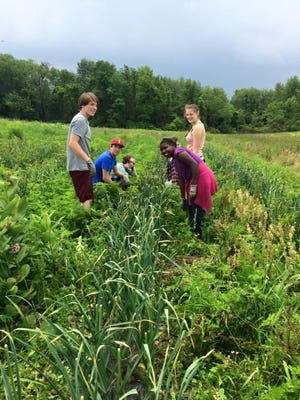 Youth Farm Project members work the gardens in Danby.