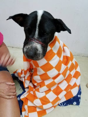 Ruth was rescued Tuesday in Lincoln Parish. Someone had wrapped her mouth with electrical tape before dumping her in the parish.