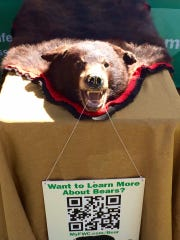 A bear skin was featured at FWC's bear management display, which seeks to inform locals about Florida black bears.