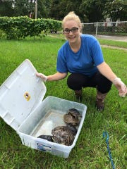 Jenna Pierson shows turtles recovered from a Garden