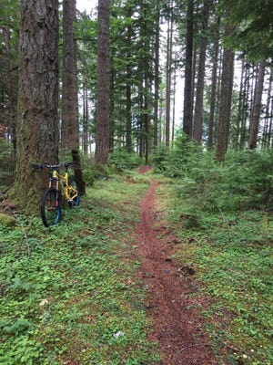Old trails are being improved, and new trails are being built by the Cascadia Trail Crew for mountain biking at Shellburg Falls Recreation Area east of Salem.