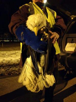 An injured bald eagle was found at La Follette Park in Kaukauna.