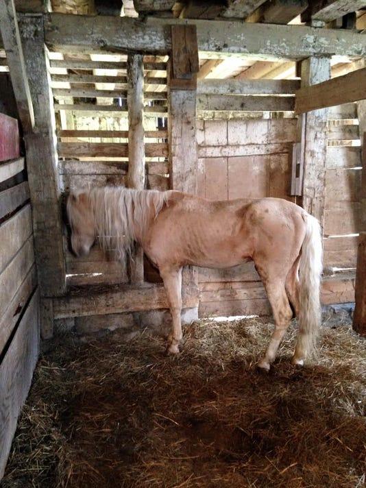Stallion before