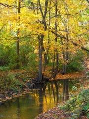Parson's Creek runs through Hobbs Woods, a popular nature spot in Fond du Lac County.