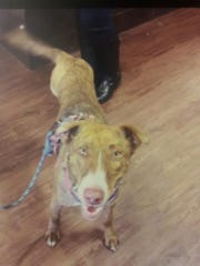 Lily is now named Layla and is living in Indianapolis after her owner was killed in Tennessee. A family in New Mexico is desperate to get Lily back.