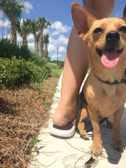 Do you know me? I was found at the end of Vanderbilt Drive near Everglades Golf Course, east of Collier Boulevard.