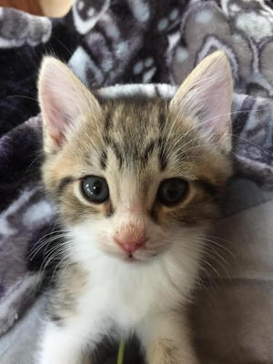 Ernie has been in a foster home with his brothers since he was just a week old.