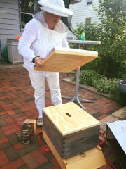 Liz Johnson places the cover on a hive she never should have moved to her patio.