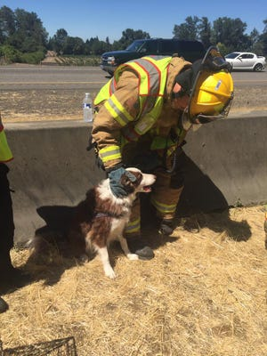 Crews pulled three dogs to safety following a rollover crash on Interstate 5 Friday afternoon.