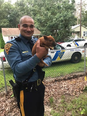 New Jersey State Police Trooper Ray Coleman and Norris, a piglet he helped capture when it was on the loose in Commercial Township.
