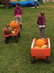 Collecting nature's bounty at the pumpkin patch is