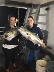A couple of the big bluefish landed on the Paramount