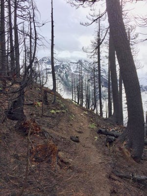 Impacts to the Whitewater Trail, in the Mount Jefferson Wilderness, from the Whitewater Fire. Photo taken late September 2017.