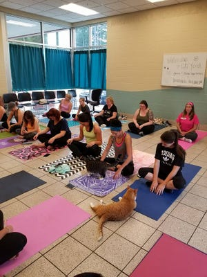 Friendly felines wander through a cat yoga class in September at the Marathon County Humane Society, taught by an instructor of 5 Koshas Yoga & Wellness.