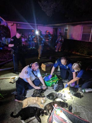 The Pensacola Fire Department responded to a house fire on Saturday morning at an animal foster home on Leesway Boulevard. Eleven cats died while nine were rescued.