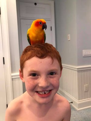 Birdie, the star traveler, sits atop David Fine's head. The Fine family discovered the sun conure the day after Thanksgiving.