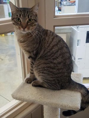 I am a very playful kitty and would do well in any home. Come get me!