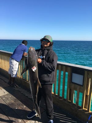 Local angler Zac Taylor with the Panhandle's first cobia of the year caught on Pensacola Beach Gulf Fishing Pier.