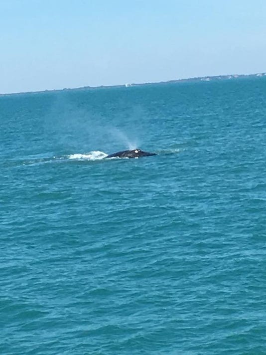 636570692280703518-whale-lady-chris.jpg
