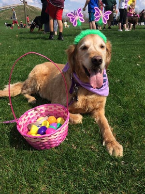 A happy dog poses with treats at the 2017 Ingham County Animal Shelter Fund's Doggie Easter Egg Hunt and Kid's Eggstravaganza at Hawk Island Park.