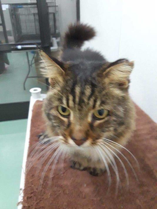 0411-ynmc-catty-handsome-harry.jpg