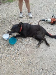 Jack the dog was rescued Wednesday in Taney County.