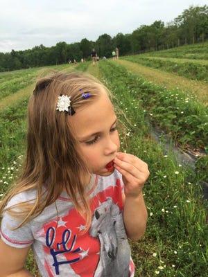 Strawberry picking at Snyder's Farm.