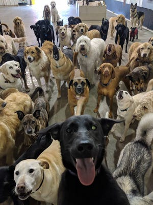 This epic dog selfie was captured by workers at Go Fetch Dog Daycare and Boarding.