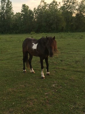 Pony pictured at Katie Tyrrell's China Township farm in recent years.