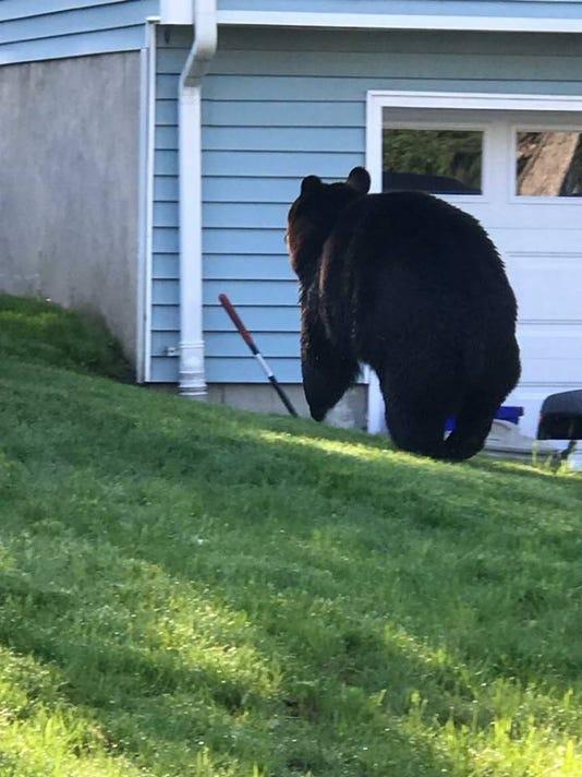 Hillburn black bear