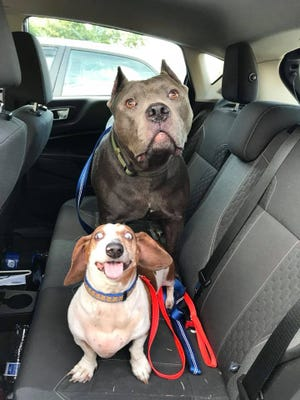 OJ and Dozer go home together after being in a shelter in Richmond, Virginia.