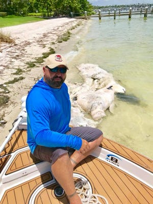 Fishing guide Chris O'Neill poses near a dead manatee, one he thinks was killed by a strong red tide in the area.