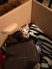 Three newborn kittens were found in a bag outside of