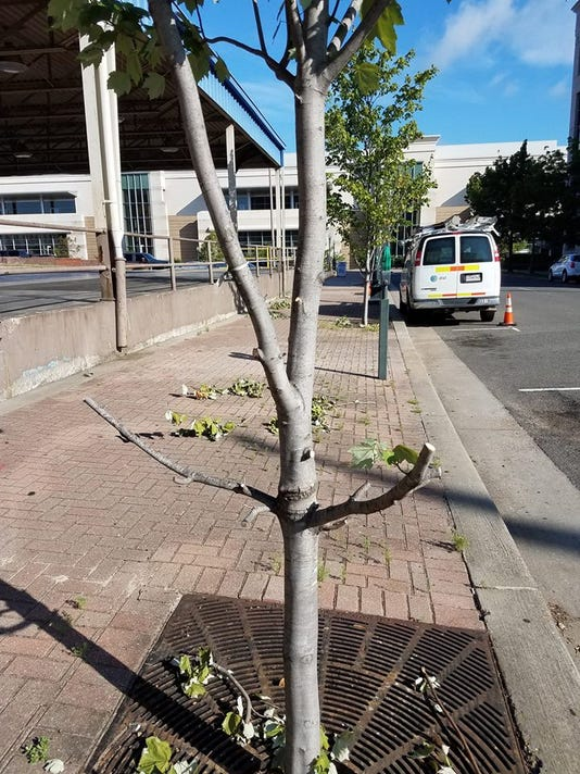 636668218589254118-chopped-tree.jpg